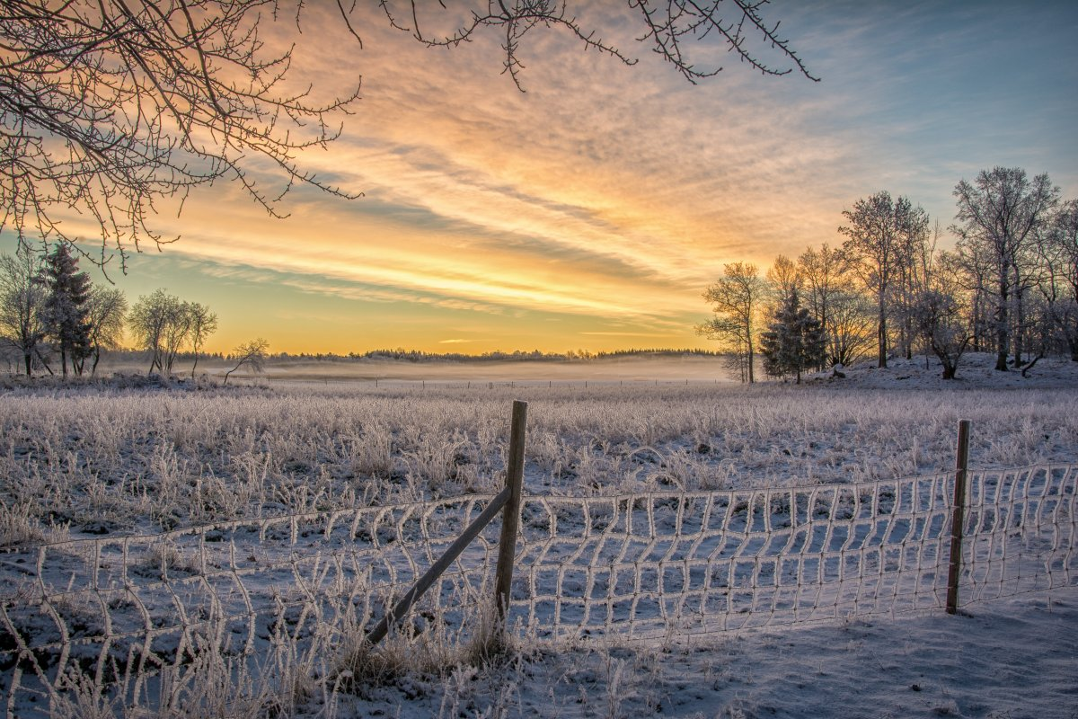 Frosty winter sunrise
